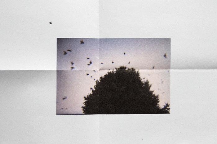 02_La_femme_Oiseau_Marine_Lecuyer_Wb.png